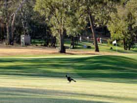 jubilee golf course