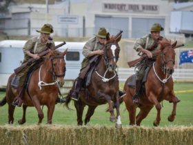 ALHA riders compete in a hurdles event. This simulates jumping over a trench in WW1