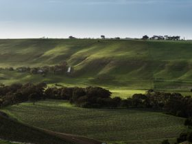 The view from our beautiful terrace, overlooking the vineyard and Moorabool Valley