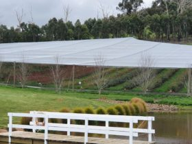 Oasis Berry Farms