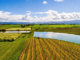 Yering Farm Wines Property