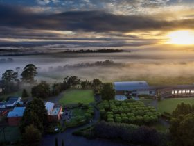 Sunrise over the winery estate