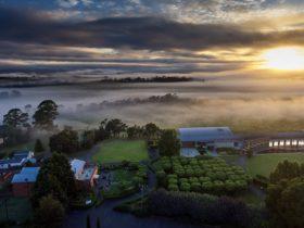 Sunrise over the winery estate
