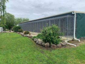 Hillview Farm 5 Star Boarding Cattery