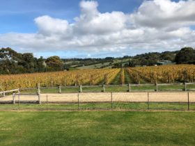 Pier 10 winery is one of our lunch venues on our daily Peninsula wine tours.s