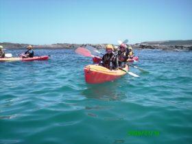 Seals Great Ocean Road