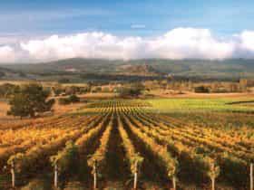 Hanging Rock Jim Jim vineyard panorama