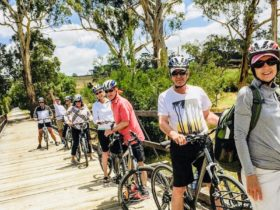 Cycling Tours Yarra Valley