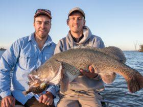 Lake Mulwala Murray cod