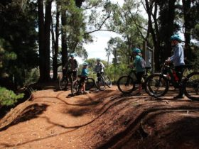 Dirt hill, trees and people on bikes waiting to ride
