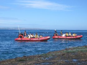 Seals By Sea Tours