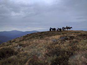 Snowy Range Horseback Tours