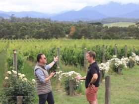 Yarra Vally Wine tasting