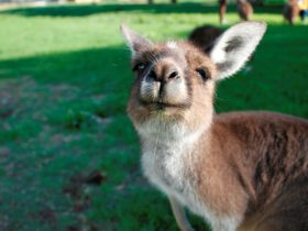 Bunbury Wildlife Park, Bunbury, Western Australia