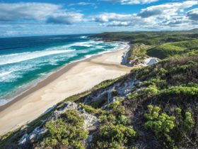 Conspicuous Beach to Rame Head Campsite, Nornalup, Western Australia