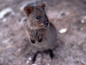 Wild West: Animals in the Archives, Northbridge, Western Australia