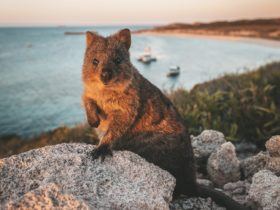 Bill Peach Journeys - Perth, Western Australia