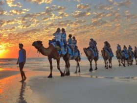 Broome Camel Safaris, Cable Beach, Western Australia