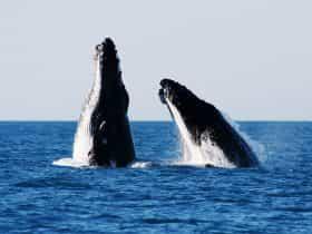 Broome Whale Watching, Djugun, Western Australia