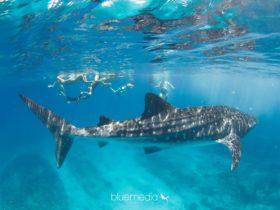Ningaloo Blue Dive, Exmouth, Western Australia