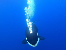 Whale Watch Western Australia, Fremantle, Western Australia